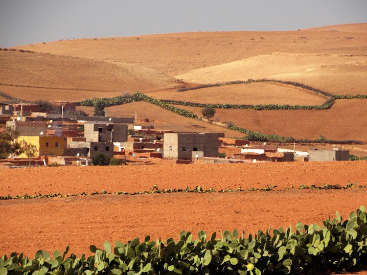 Photo: Farming in arid zones in Morocco's Province of Settat. Credit: Fabiola Ortiz | IDN-INPS.