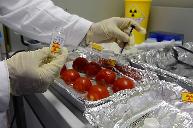 Photo: A researcher tests tomatoes at the IAEA's Food and Environmental Laboratory in Seibersdorf, Austria. Credit: IAEA.