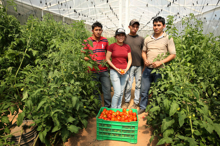 Photo: A group of young farmers manage their own tomato business in El Salvador. Rapidly evolving agriculture and food systems have a huge potential for creating employment opportunities for rural youth. ©IFAD/Carla Francescutti.